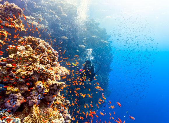 Red sea diving, червоне море, дайвінг, єгипет, шарм-ель-шейх, хургада